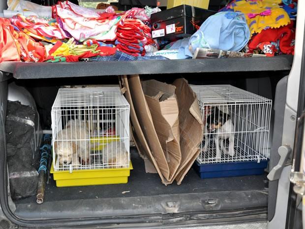 Operação contra venda de animais em vias públicas em Volta Redonda (Foto: Divulgação/Prefeitura Volta Redonda)
