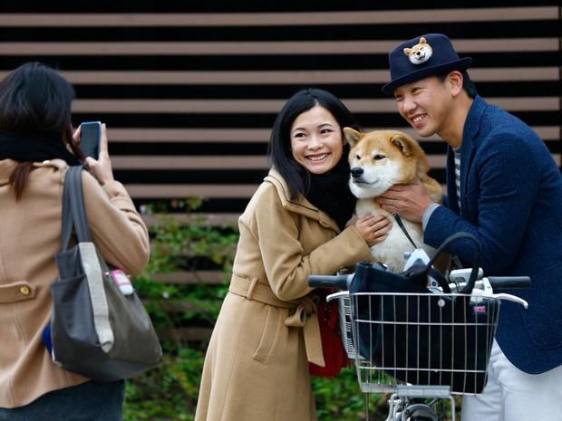 Maru é 'parado' por fã para tirar fotos durante passeio com seu dono, Shinjiro Ono (Foto: Shizuo Kambayashi/AP)