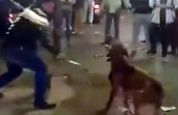 Grupo é acusado de torturar animal até a morte (Foto: Reprodução/YouTube/)