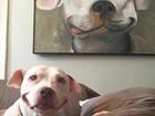 Cão vira hit ao repetir pose que fez em quadro