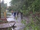 Cidades do interior de SP castigadas pela chuva cancelam carnaval de rua