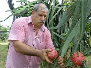 Produtor rural doa frutas a amigos e parentes (Foto: Reprodução/TV Anhanguera)