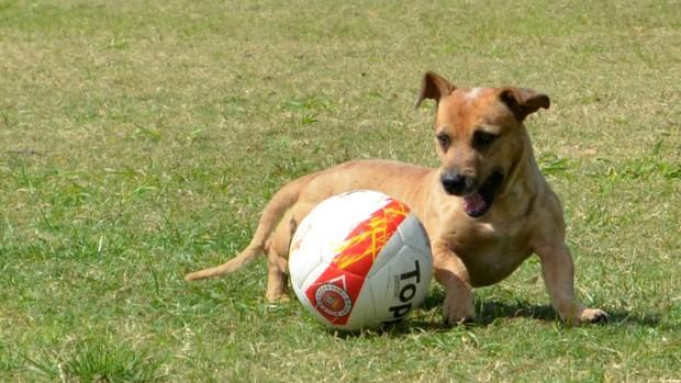 Cachorro no treino do Clube Atlético Joseense (Foto: Danilo Sardinha/Globoesporte.com)
