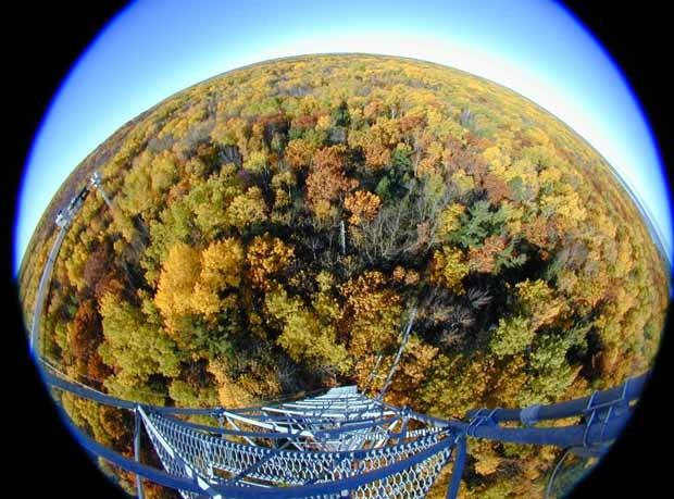 Visão da cobertura florestal a partir de uma das torres de fluxo da Estação Biológica da Universidade de Michigan (Foto: Chris Vogel)