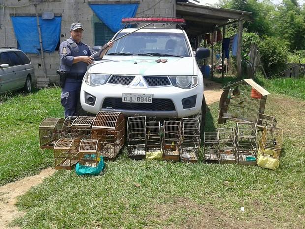 Apreensão aves Taubaté (Foto: Divulgação/Polícia Ambiental)