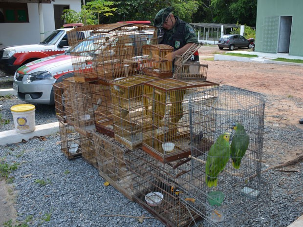 Aves são apreendidas em João Pessoa  (Fot Walter Paparazzo/G1)