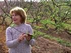Falta de frio prejudica floração dos pomares de pêssego no RS