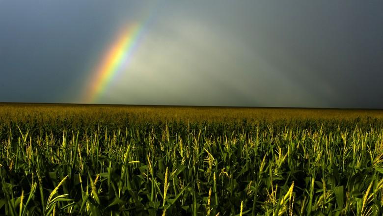 lavoura-de-milho-chuva-arco-iris-graos (Foto: José Medeiros/Ed. Globo)