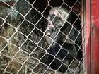 Moradores encontram macaco na sala de casa em Montes Claros