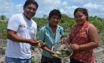 Lagartas viram refeição de índios macuxi em Roraima; FOTOS (Emily Costa/ G1 RR)