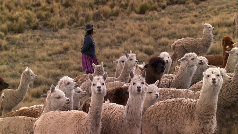 ovelha-pastor-Tv (Foto: Reprodução TV Globo )