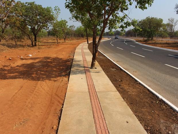 Árvore também ficou no meio da calçada (Foto: Patrício Reis/G1)