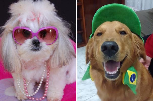 Galerias divertidas exibem todo o charme dos cachorrinhos (Foto: Arquivo pessoal)