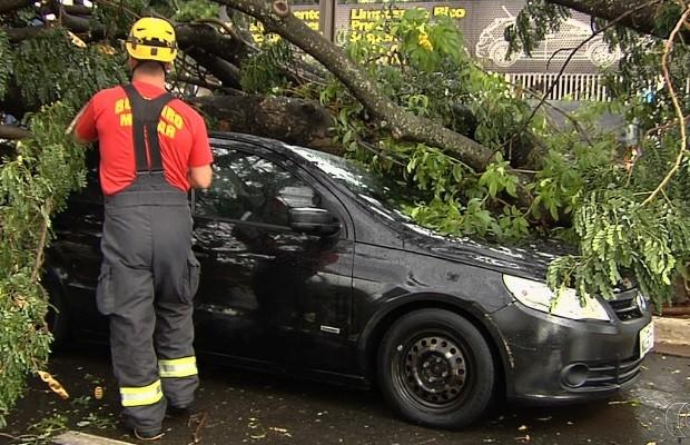 Chuva alaga ruas, derruba árvores e deixa bairros sem energia em Goiânia, Goiás (Foto: Reprodução/TV Anhanguera)