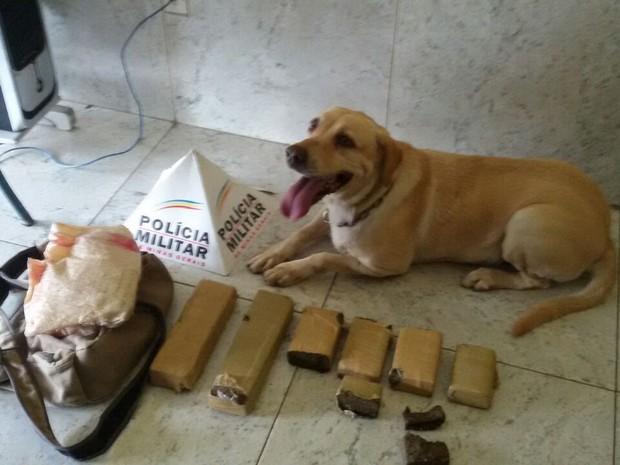 Cadela Eva encontrou cerca de três quilos de maconha em Ipatinga (Foto: Polícia Militar/Divulgação)