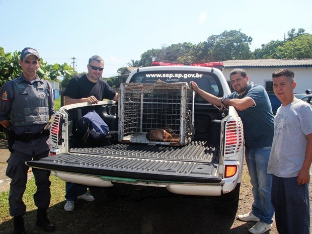 Animal foi receberá avaliação do veterinário da Secretaria de Meio Ambiente do Estado (Foto: Marcos Costa / Arquivo Pessoal)