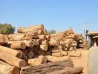 Quinze pessoas são indiciadas por crimes ambientais em Mato Grosso