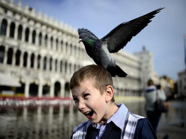 Pomba pousa na cabeça de menino na Praça de São Marcos, em Veneza (Foto: Olivier Morin/AFP)