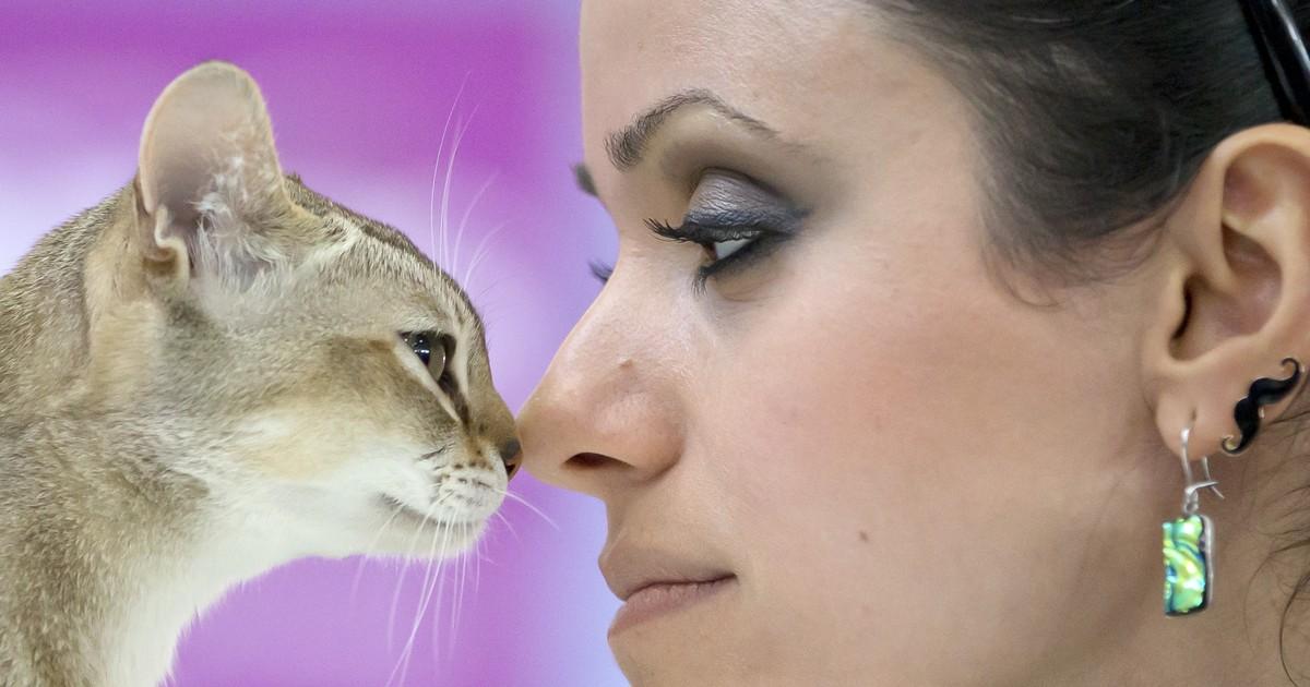 Estudo relaciona crianças que crescem com gatos à esquizofrenia