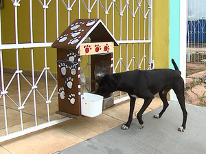 Empresária instalou casinha com comida e água no portão de casa (Foto: Felipe Lazzarotto/ EPTV)
