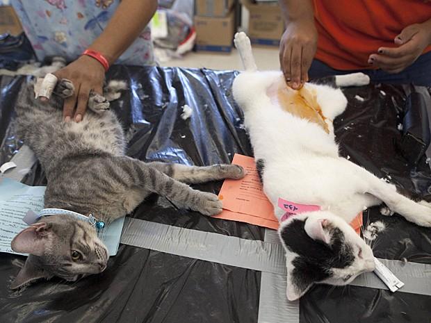 Gatos esterilizados (Foto: Victor Ruiz Garcia/Reuters)