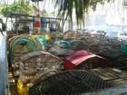 Homem é detido por manter mais de 70 pássaros em cativeiro em Itupeva