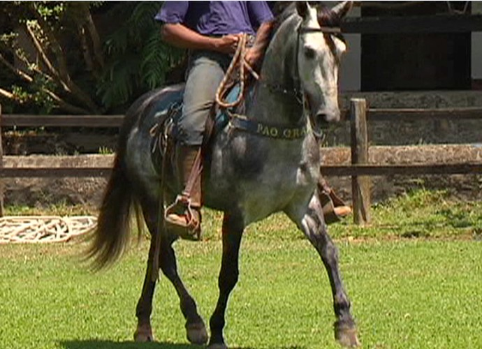 Reveja o 'Revista' de 2010 que falou sobre o cavalo mangalarga  (Foto: Rio Sul Revista)