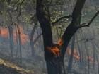Ventos fortes prejudicam combate a incêndios no Pantanal em MS