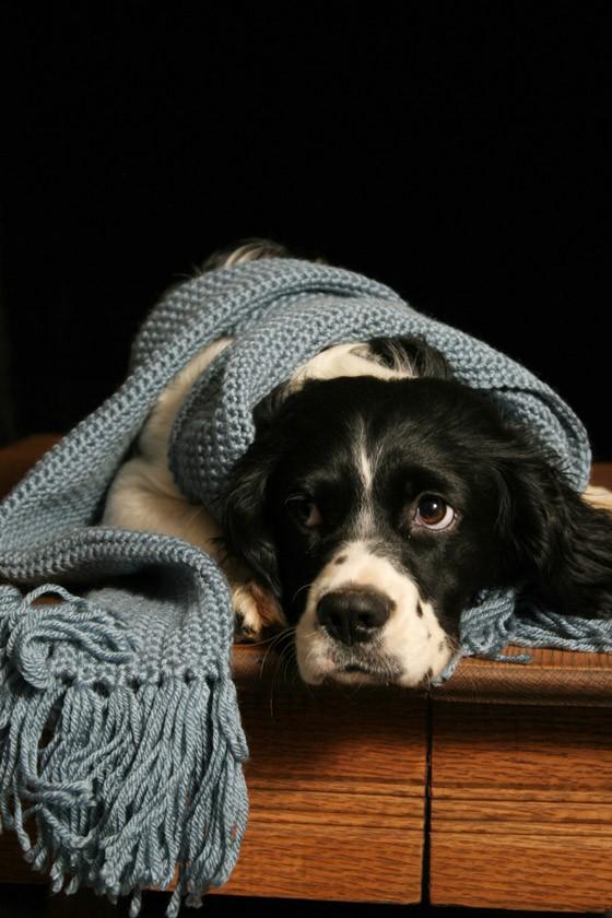 Cães sofrem com os dias gelados no inverno (Foto: SXU.hu)