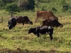 Criadores tentam se recuperar das perdas causadas pela seca na BA