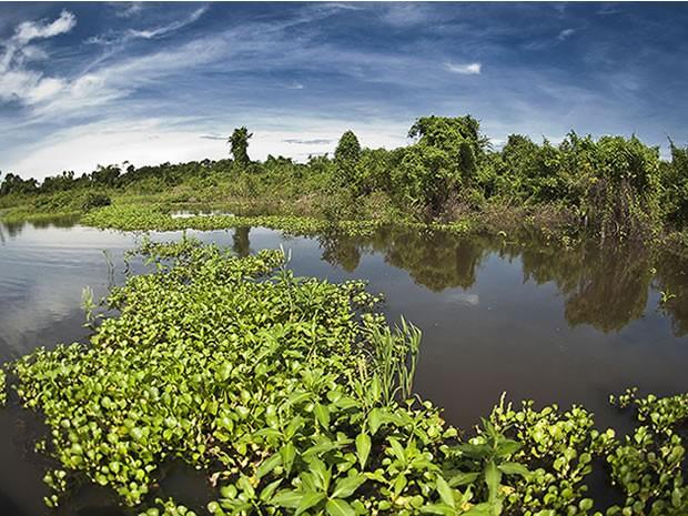 Pesquisa apontou que brasileiro ainda sabe pouco sobre o Pantanal. (Foto: Sérgio Amaral/WWF-Brasil)