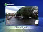 Tempestade derruba árvores na área central de Mirandópolis