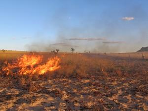 Brigadistas usam fogo para fazer manutenção de aceiros em Mateiros (TO) (Foto: Cassiana Moreira)