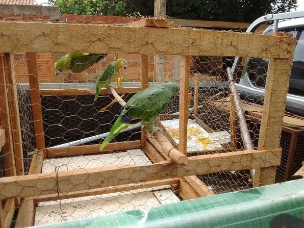 Aves foram apreendidas na capitala pós denúncia anônima (Foto: Divulgação/PM)
