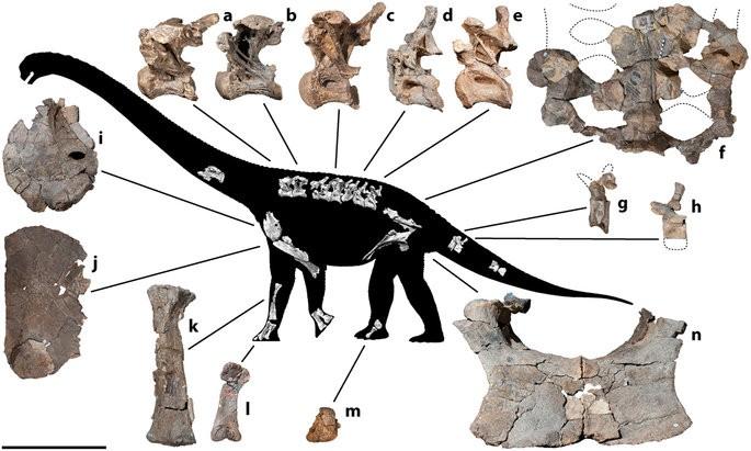 Dinossauro é descoberto na Austrália por um fóssil de dedão do pé