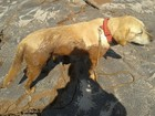 Cão catarinense fareja local onde estaria vítima em Mariana (MG)