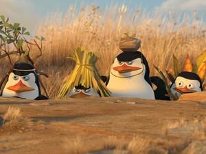Os pinguins de Madagascar é a pré - estréia nos cinemas de Porto Velho (Foto: Divulgação)