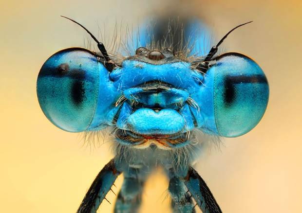 Olho em close de uma das espécies fotografadas (Foto: Ireneusz Irass Walędzik/Caters)