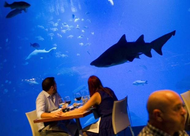 Casal é 'observado' por tubarão enquanto jantam no 'Big Blue', em Palma de Mallorc (Foto: Jaime Reina/AFP)