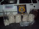 Polícia de Rio Preto, SP, apreende 65 quilos de agrotóxico contrabandeado