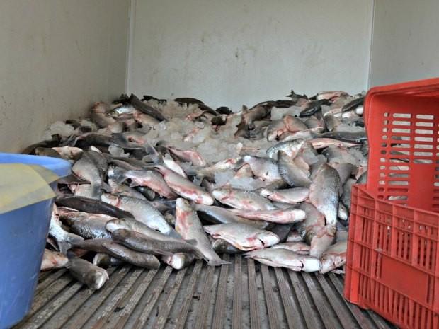 Cerca de 1,5 tonelada de peixe é apreendida em reserva indígena Peixe_abre