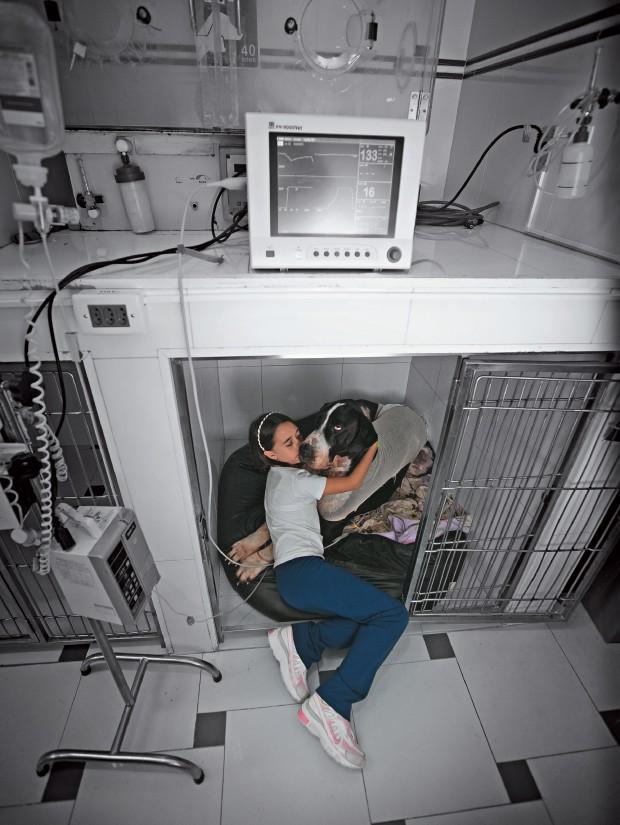 """CUMPLICIDADE A estudante Laura Aragão, de 9 anos, abraça sua """"irmã"""" Hanna, fêmea de dog alemão, internada no hospital veterinário. Os bichos viraram parte emocional da família (Foto: Marcelo Min)"""