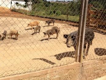 Cerca de 40 animais foram encontrados pelos fiscais (Foto: Divulgação/ Polícia Civil)