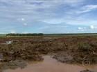 Em menos de um mês, preço do milho sobe 20% em Mato Grosso
