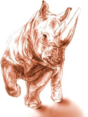 Ilustração de um rinoceronte, do tipo que habitava a Turquia 9 milhões de anos atrás (Foto: Maëva J. Orliac/Divulgação)