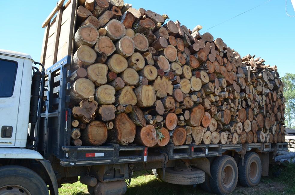 Motorista foi multado por transportar madeira ilegalmente no Cone Sul (Foto: Eliete Marques/G1)