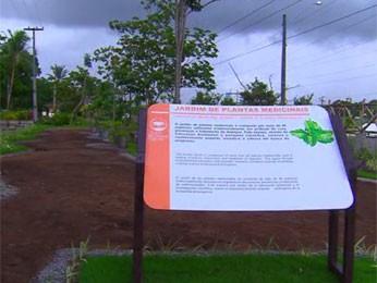 Na quinta (5), Dia Mundial do Meio Ambiente, haverá plantio de 100 mudas de pau-brasil no Jardim Botânico (Foto: Reprodução / TV Globo)