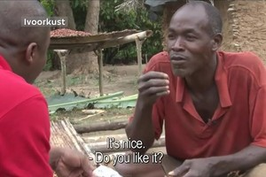 os plantadores de cacau (Foto: Reprodução / Youtube)