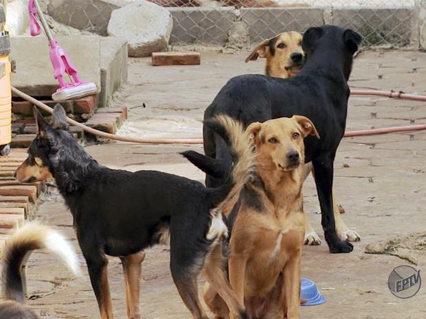 Casa que abriga 70 cães gera  polêmica em Bueno Brandão (Foto: Reprodução EPTV)