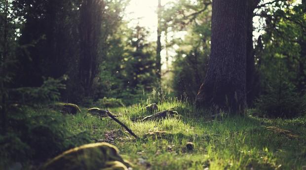 floresta, mata, árvore, natureza, natural, ambiente, meio ambiente, grama (Foto: Reprodução/Pexels)